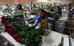 Sự thật thú vị về quốc gia không kỷ niệm, chỉ tập trung bán hoa phục vụ Valentine khắp thế giới, thu về hàng trăm triệu USD trong vài ngày
