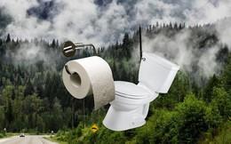 Lượng giấy vệ sinh người Mỹ dùng trong 1 năm bằng cả cánh rừng Canada