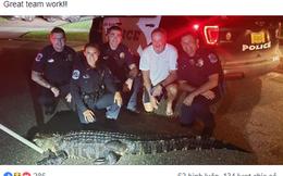 Mỹ: Cá sấu đói bụng và hứng tình đang xâm chiếm Florida
