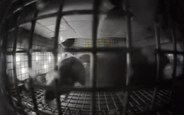 NASA mang chuột lên ISS, và chúng biến thành những con chuột bay đáng sợ thế này đây