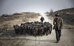 Người Trung Quốc đang nuôi gần 1,4 tỷ dân của mình như thế nào? (Phần 4)