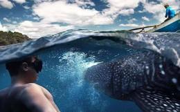 Startup Đài Loan cho phép du khách đặt tour trải nghiệm trượt tuyết và bơi cùng cá mập… vào phút chót khởi hành, tham vọng thành công ty du lịch số 1 châu Á