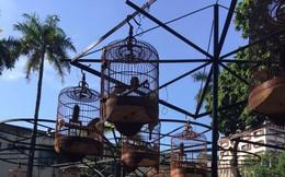 Một vòng du lịch quanh Sài Gòn: Quán cà phê chim độc đáo trong mắt du khách Australia