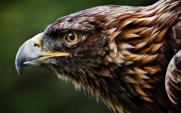 Nghỉ việc và ra làm chủ cần kiên định: Đại bàng sinh ra để tự do bay lượn, săn bắt và chinh phục; còn làm kiếp gà chỉ quanh quẩn gáy, ăn, lên chuồng theo đàn