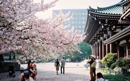 Tại sao Fukuoka là thành phố đổi mới nhất của Nhật Bản?