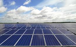 Tập đoàn Bamboo Capital khánh thành nhà máy điện mặt trời đầu tiên, tổng mức đầu tư 1.088 tỷ đồng