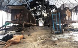 Hàn Quốc đóng cửa một trong những khu chợ thịt chó lớn nhất