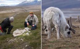Sự đáng sợ của biến đổi khí hậu: Đến động vật ở vùng lạnh nhất cũng không thể sống nổi nữa