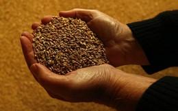 Không còn là viễn tưởng, một công ty Phần Lan đã hiện thực hóa ý tưởng sản xuất thức ăn từ không khí