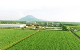 """Các chuyên gia quốc tế chia sẻ bí quyết giúp nông dân Việt Nam tăng năng suất mía đường lên gấp đôi, ngang ngửa con số của """"người hàng xóm"""" Thái Lan – 190 tấn/ha"""