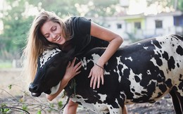 Kinh doanh farmstay: Về quê nuôi cá trồng rau chưa chắc ra tiền nhưng bán cái ôm của những con bò thì có, một trang trại thu phí 75 USD/giờ!