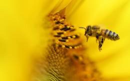 """Microworker: Những """"chú ong"""" cần mẫn phục vụ cho cuộc sống số của người khác"""