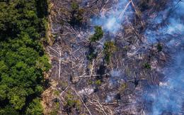 Thợ mỏ trái phép, nông dân và khai thác tài nguyên của Brazil: Những thế lực đang âm thầm phá hủy lá phổi xanh Amazon