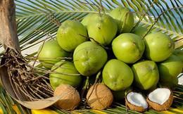 Vì muốn bà con quê vợ tự hào, doanh nhân này xây dựng công ty xuất khẩu dừa xiêm, thanh long.. chiếm 50% lượng hàng đi Mỹ