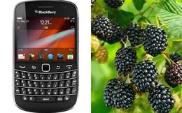 Nghệ thuật đặt tên cho các thương hiệu lớn đằng sau câu chuyện BlackBerry được đặt theo tên một loại quả dại