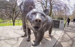 Câu chuyện phi thường của Wojtek: Từ chú gấu mất mẹ đến binh nhì được vinh danh anh hùng và dựng tượng đài trong Thế chiến II