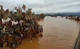 1.500ha trái cây của HAGL tại Lào bị ngập lụt