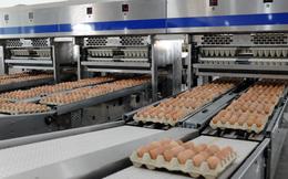 Hòa Phát bán gần nửa triệu quả trứng gà mỗi ngày, lớn nhất miền Bắc