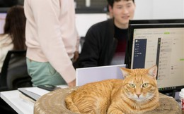 Chàng trai trẻ đứng sau startup kiếm tiền từ thú cưng: 'Thuê' nguyên đội quân 10 'hoàng thượng' mèo làm nhân viên toàn thời gian!