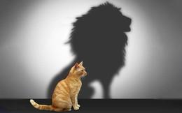 Nhân viên xuất sắc được thăng chức lên Quản lý: Hãy cẩn trọng, có thể công ty bạn vừa mất một nhân viên giỏi và có thêm một vị sếp tồi!