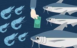 Chuyện ngành thủy sản 2018: Cá tra 'vượt vũ môn', tôm 'vùng vẫy'