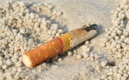Hơn 60 triệu đầu lọc thuốc lá trong đại dương có thể đã giải phóng asen, chì và nicotin vào thực phẩm bạn ăn