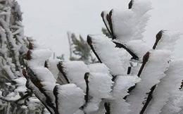 Miền Bắc sẽ chịu thêm 3-5 đợt rét đậm, rét hại trong tháng 1