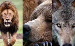 """Nhịp sinh học của bạn thuộc nhóm """"gấu, sư tử, sói hay cá heo""""? Biết được câu trả lời sẽ giúp hiệu quả lao động tăng đáng ngạc nhiên"""