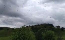 Tin thời tiết gây sốc tại Brazil: Trời nóng ẩm, nhiều mây và có khả năng xảy ra MƯA NHỆN