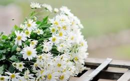 Tết đến rồi, chọn hoa theo mệnh gia chủ để cả năm được sung túc an khang, tài lộc dồi dào