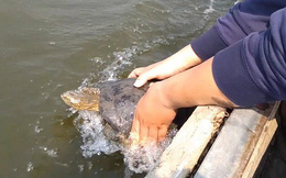 Tận mắt rùa bị chích điện bắt lại khi vừa được thả, dân phải chi tiền để cá được phóng sinh