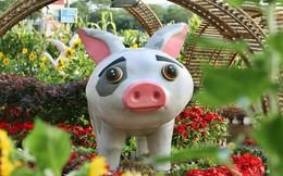 """Ngắm đàn lợn với biểu cảm """"buồn cả thế giới"""" ngộ nghĩnh và hài hước trên đường hoa xuân quận 7"""
