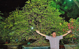 Sững sờ trước những cây mai tiền tỷ tại chợ hoa đêm
