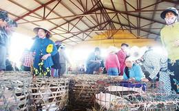 Chợ bế heo 'độc nhất' xứ Quảng