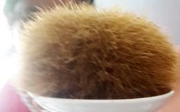 Mổ heo 300 kg chia cho bà con ăn Tết, thanh niên ở Sóc Trăng may mắn có được cát lợn quý giá