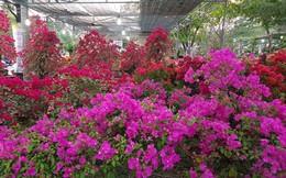 Mua hoa chiều 30 Tết và suy ngẫm về nền kinh tế 'tình thương'