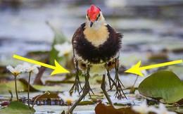 Câu chuyện cảm động về chú chim có đến... 10 cái chân đang gây bão mạng xã hội