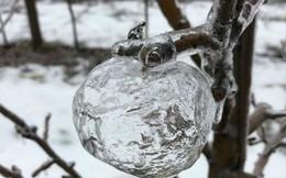 Tình trạng lạnh giá tại Mỹ tạo ra những 'quả táo ma' bằng đá vô cùng độc đáo