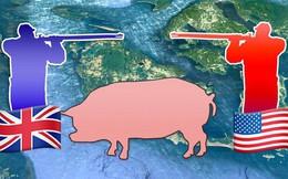 """Câu chuyện về """"War Pig"""" và """"Pig War"""" và : từ những con lợn quật ngã cả voi, đến nguy cơ gây đại chiến giữa 2 cường quốc"""
