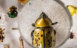 Lượng côn trùng trên thế giới đang suy giảm với tốc độ kỷ lục, gây ảnh hưởng tiêu cực đến môi trường toàn cầu