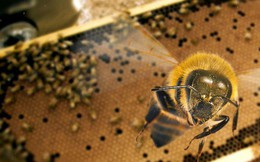 Dấu hiệu nghiêm trọng: Thế giới côn trùng đang chết quá nhanh, có thể tuyệt chủng trong thời gian tới
