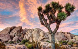 Loài cây... mọc siêu chậm: cả năm mọc được 3cm và đây là lý do tại sao