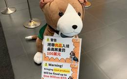 Người Việt mang thịt lợn vào Đài Loan có thể bị phạt tới 33.000 USD