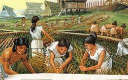 Nông nghiệp đã suýt chút nữa phá hủy nền văn minh nhân loại, đây là lý do tại sao