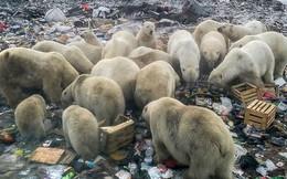 Đàn gấu Bắc cực tụ tập bới rác kiếm ăn - lời cảnh tỉnh đáng sợ tới con người về ô nhiễm môi trường