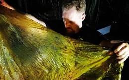 Giới khoa học bàng hoàng phát hiện đến 40kg rác nhựa trong bụng cá voi con dạt vào bờ biển Philippines