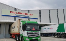 Thaco rót thêm chục nghìn tỷ đồng cho các dự án nông nghiệp, bao tiêu trái cây cho HAGL Agrico