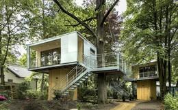 Ngắm ngôi nhà trên cây đẹp lãng mạn giữa đồi núi mênh mông
