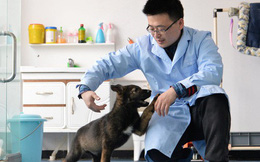Trung Quốc nhân bản chó cảnh sát để tiết kiệm thời gian huấn luyện