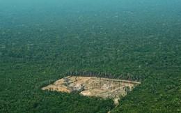 Amazon mất 30 triệu ha rừng nguyên sinh trong 17 năm